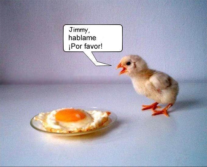 Pollito Jimmy