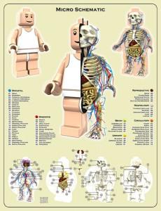 Los legofig y su anatomía 3