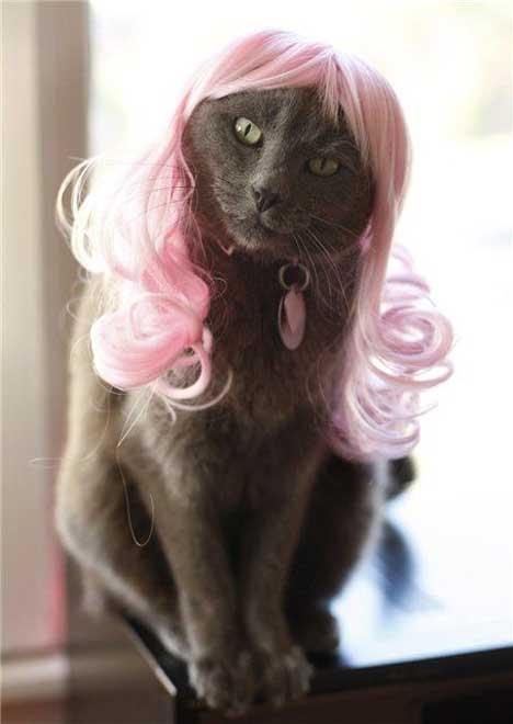 gato-peluca-rosa