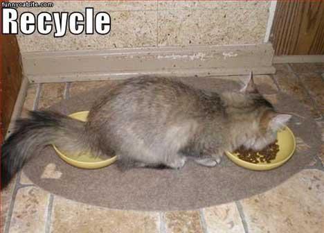 gato-reciclar