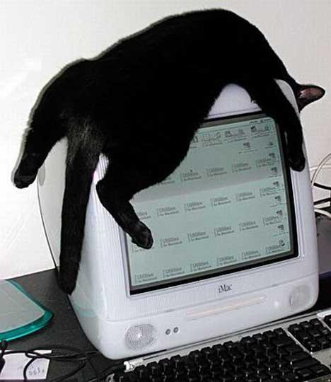 gatos-informatica2
