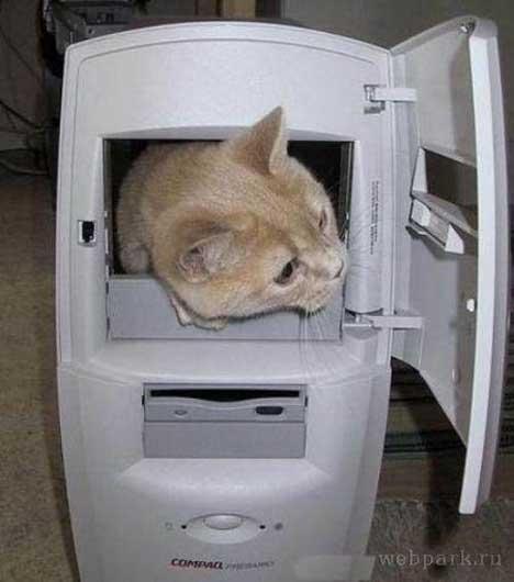 gatos-informatica3
