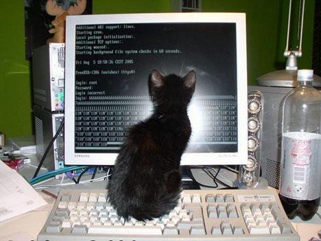 gatos-informatica4