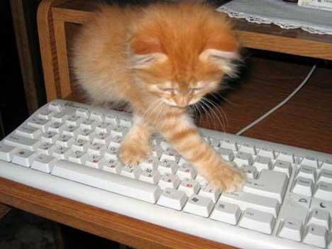 gatos-informatica5