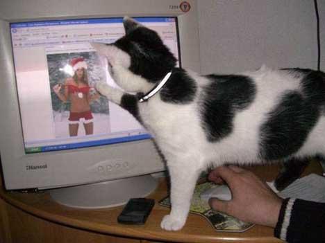 gatos-informatica6