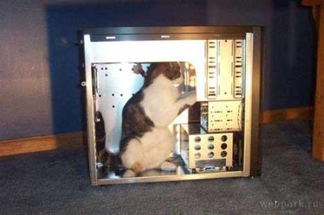 gatos-informatica7