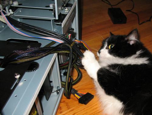 gatos-informatica8