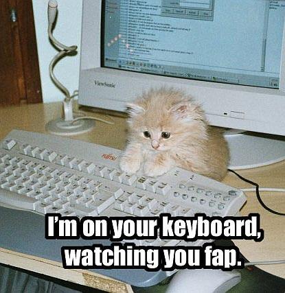 gatos-informatica9
