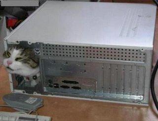 gatos-informatica13