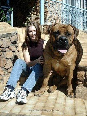perro-grande1