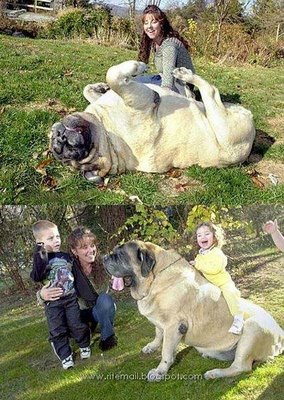 perro-grande2