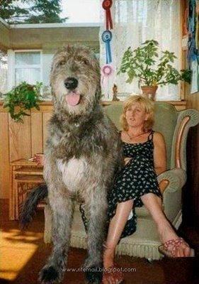 perro-grande3