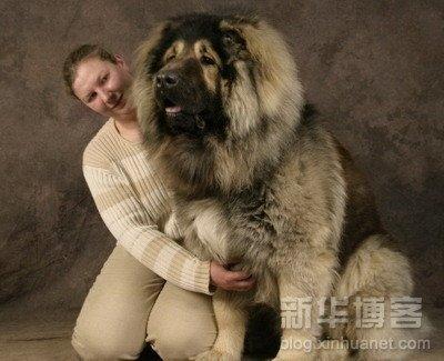 perros grandes2