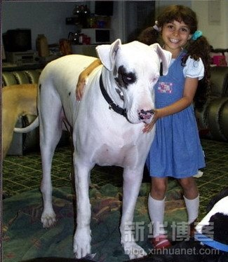 perros grandes3