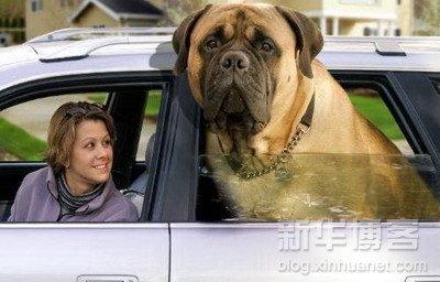 perros grandes5