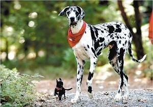 perros grandes6