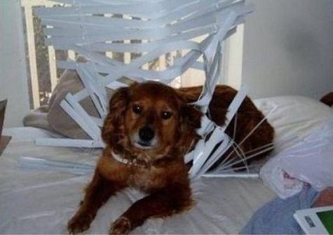 El perro amenazador 3