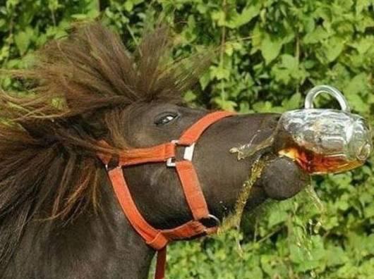 caballo borracho