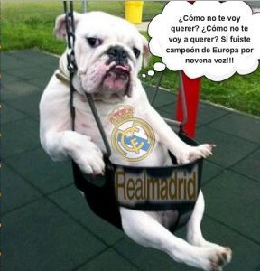 perro madridista