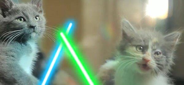 Gatos Jedi, los nuevos personajes de Star Wars 2